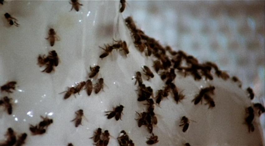 BeeGirls-Bees