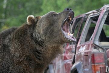 Grizzly Rage - Die Rache der Bärenmutter