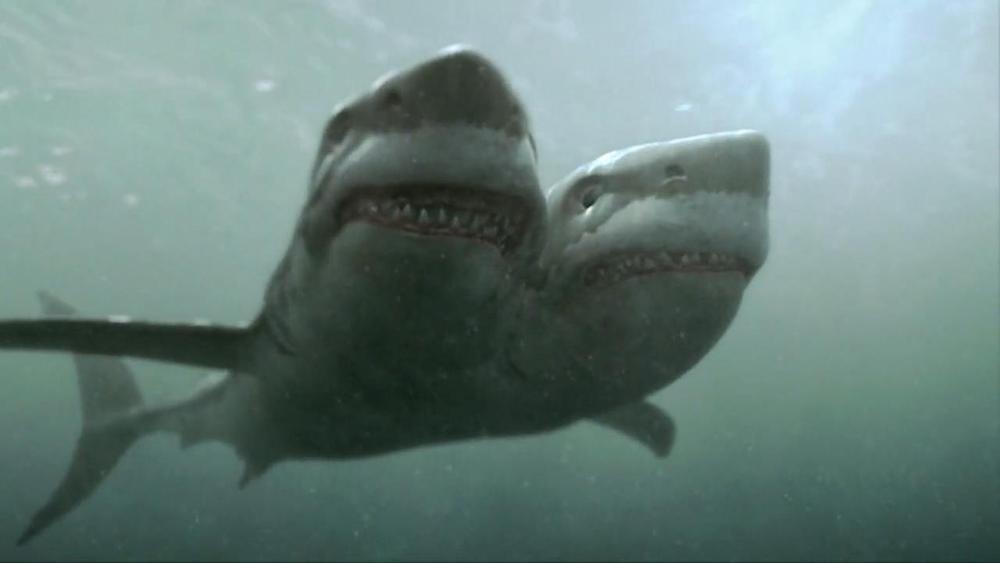 2-headed-shark-attack-4